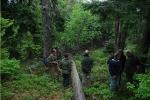 Primeval forest in Poľana