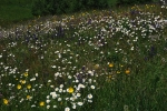 Meadow in Central Slovakia