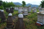 Old and new bee hives