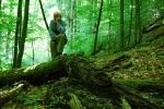 Forest in Východní Poloniny NP
