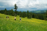 Spring in Carpathians